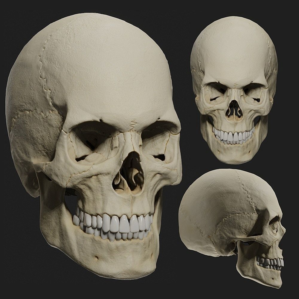 PBR male skull model
