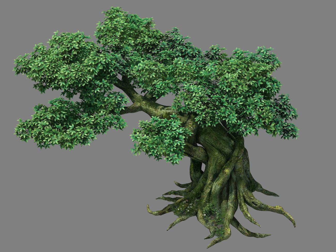 Kazlog shallow bay - tree 04