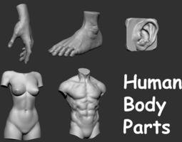 3D model Human Body Parts