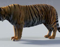 Tiger maya 3D Model