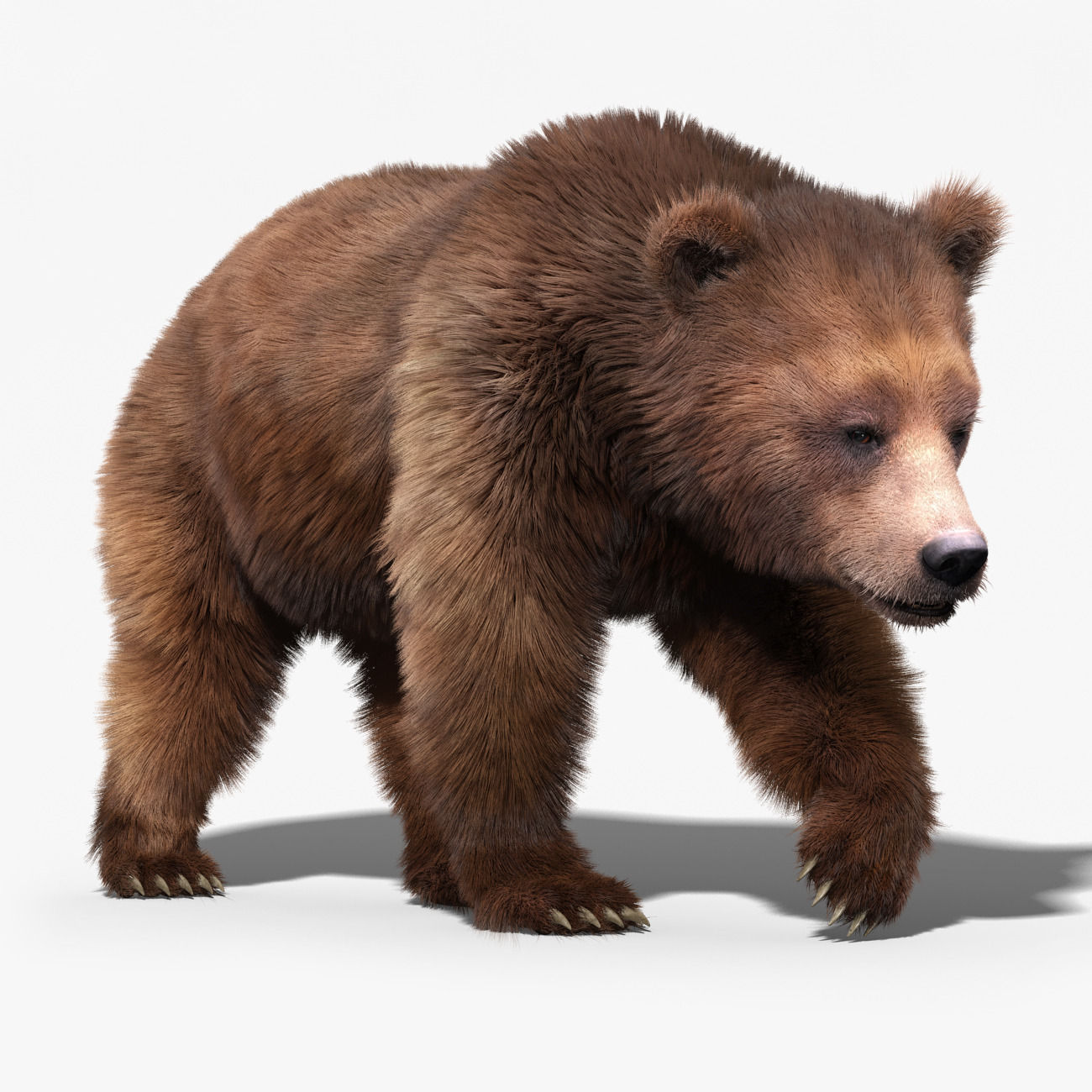 Brown Bear 3 Fur Animated 3d Model Animated Rigged Max