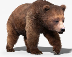 Brown Bear 3 FUR ANIMATED 3D Model