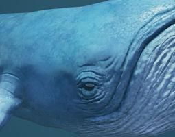 3D asset Blue Whale