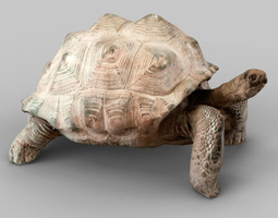 3d asset low-poly turtle