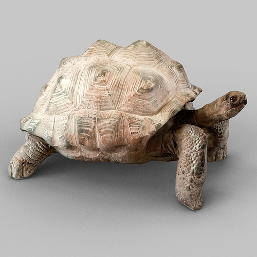 turtle 3d model low-poly obj mtl 1