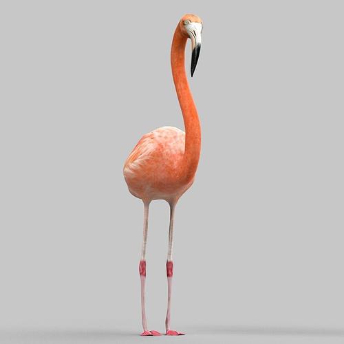 flamingo 3d model obj mtl fbx 1