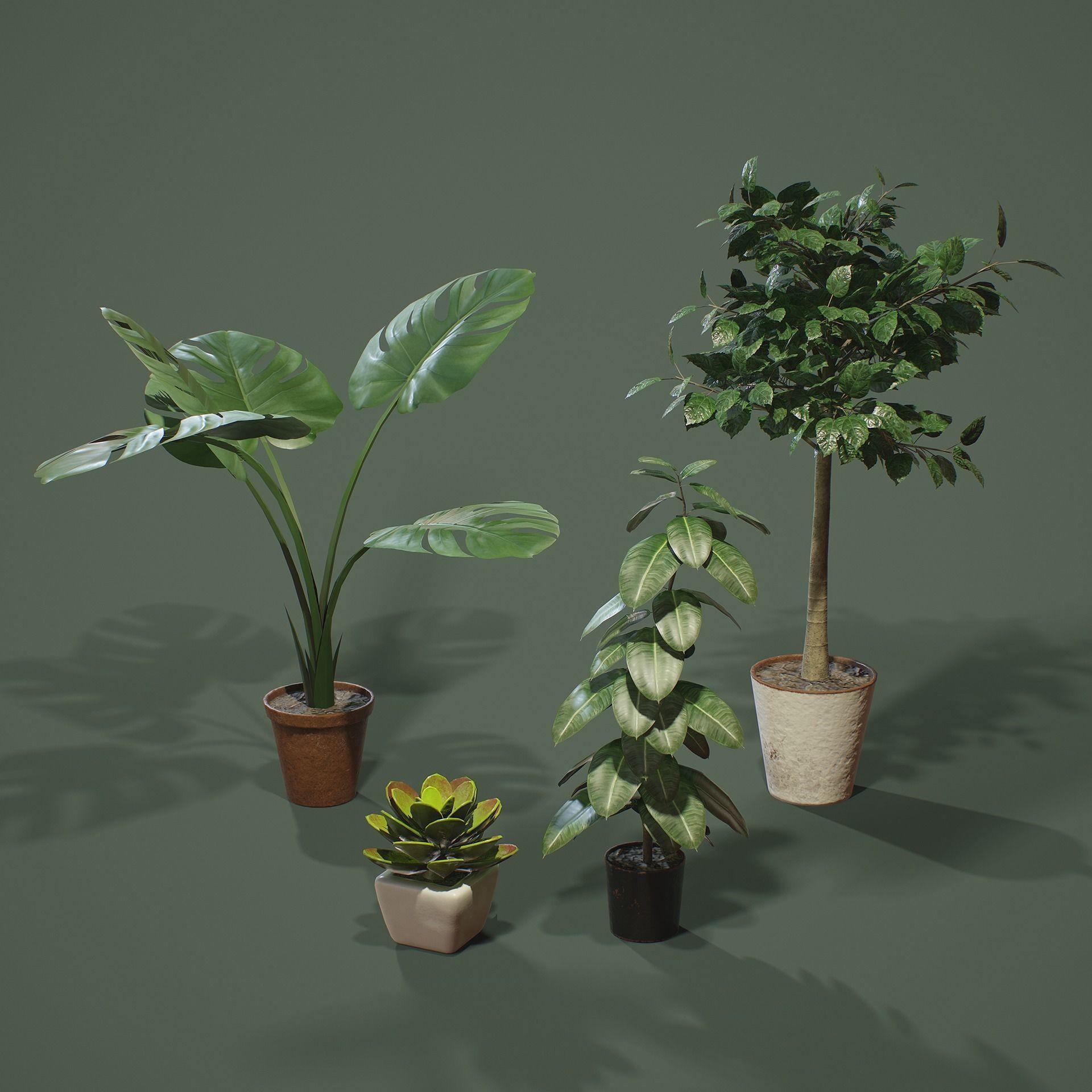 PBR House Plants