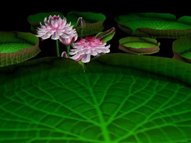 Flower Guyana