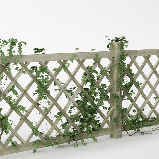 Fence 01 with ivy