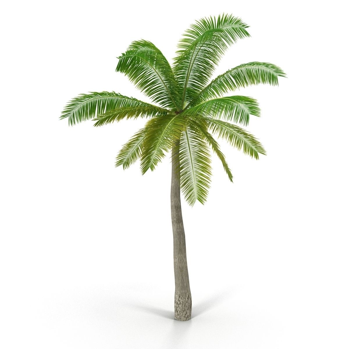 Coconut palm 3D Model .max - CGTrader.com