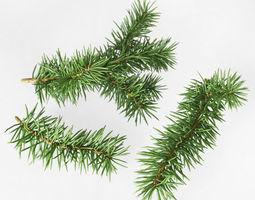 3d model fir branches