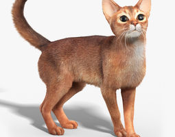 Abyssinian cat FUR RIGGED 3D Model