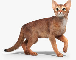 Abyssinian cat 2 FUR ANIMATED 3D Model