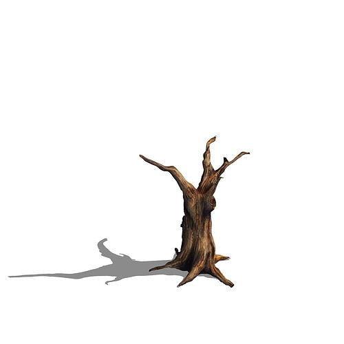 Desert - dead tree 13