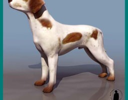 BRACO DOG HUNTER 3D Model