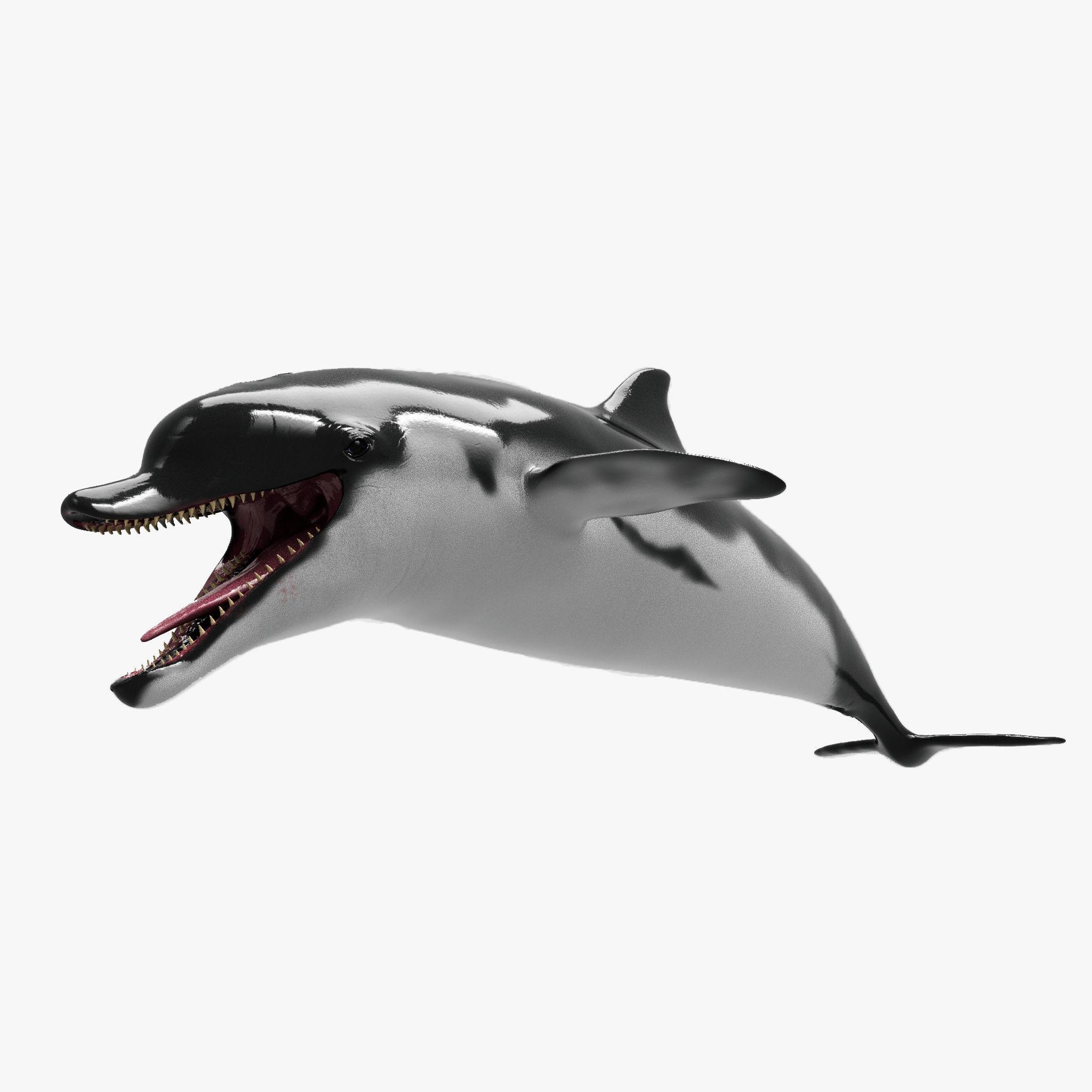 Dolphin Sculpt