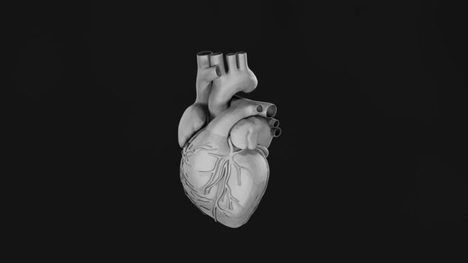 human heart 3d model obj 1