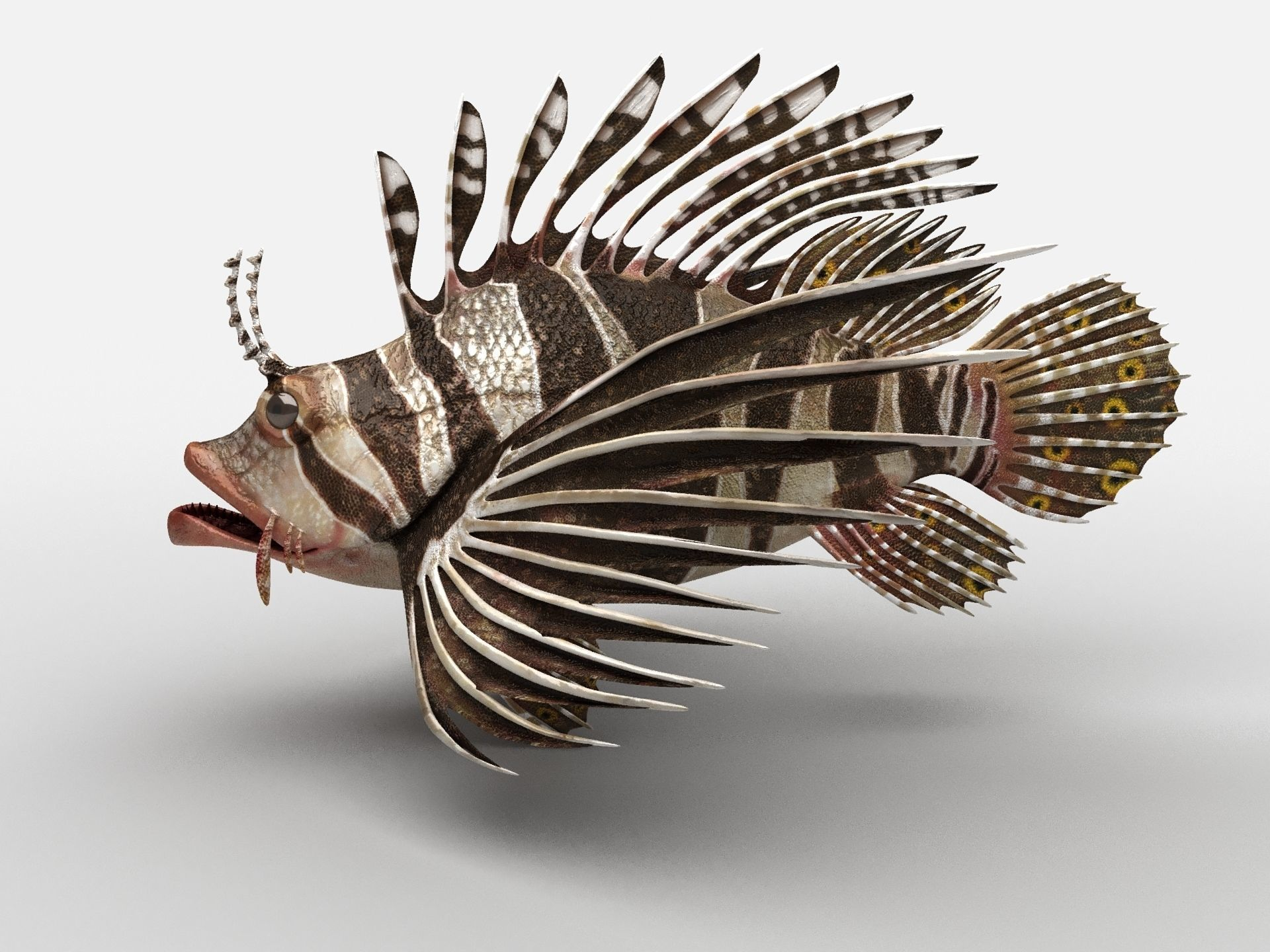 Scorpion fish Scorpen-1