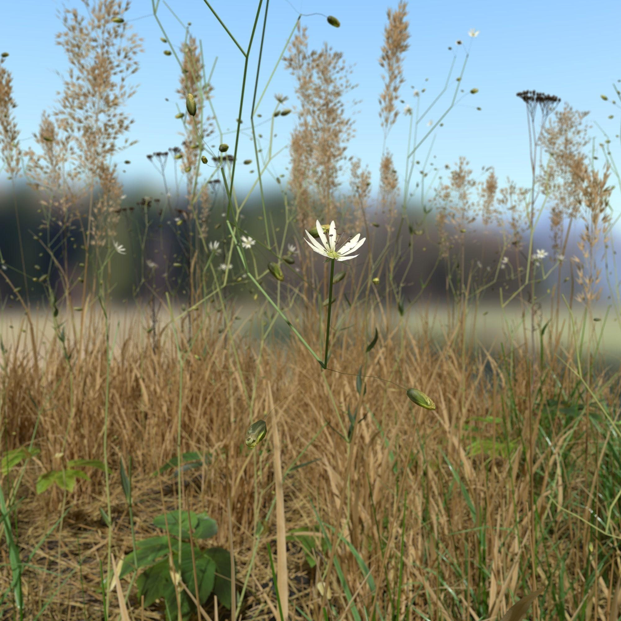 Grass Leaf Starwort Meadow Patch