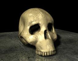 Skull Hominid 3D model