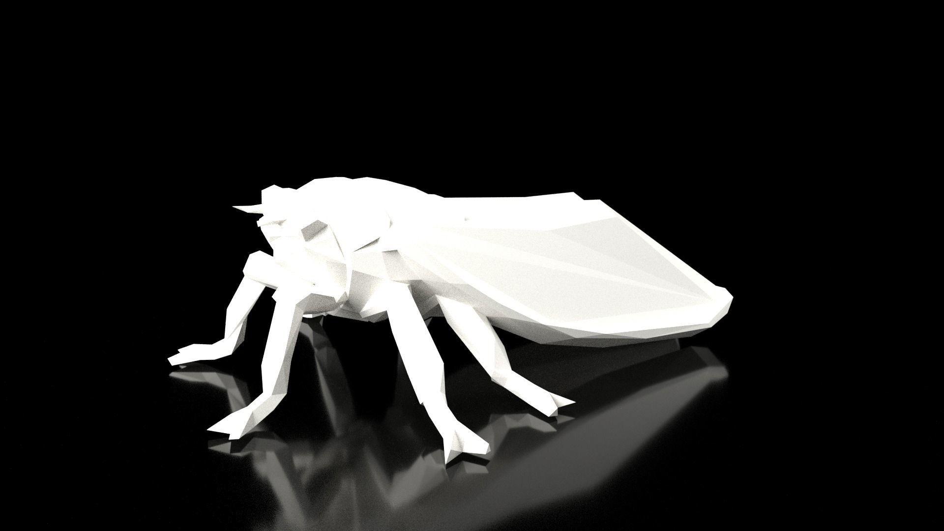 Cicada Low Poligonal