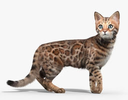 Bengal cat FUR ANIMATED 3D Model