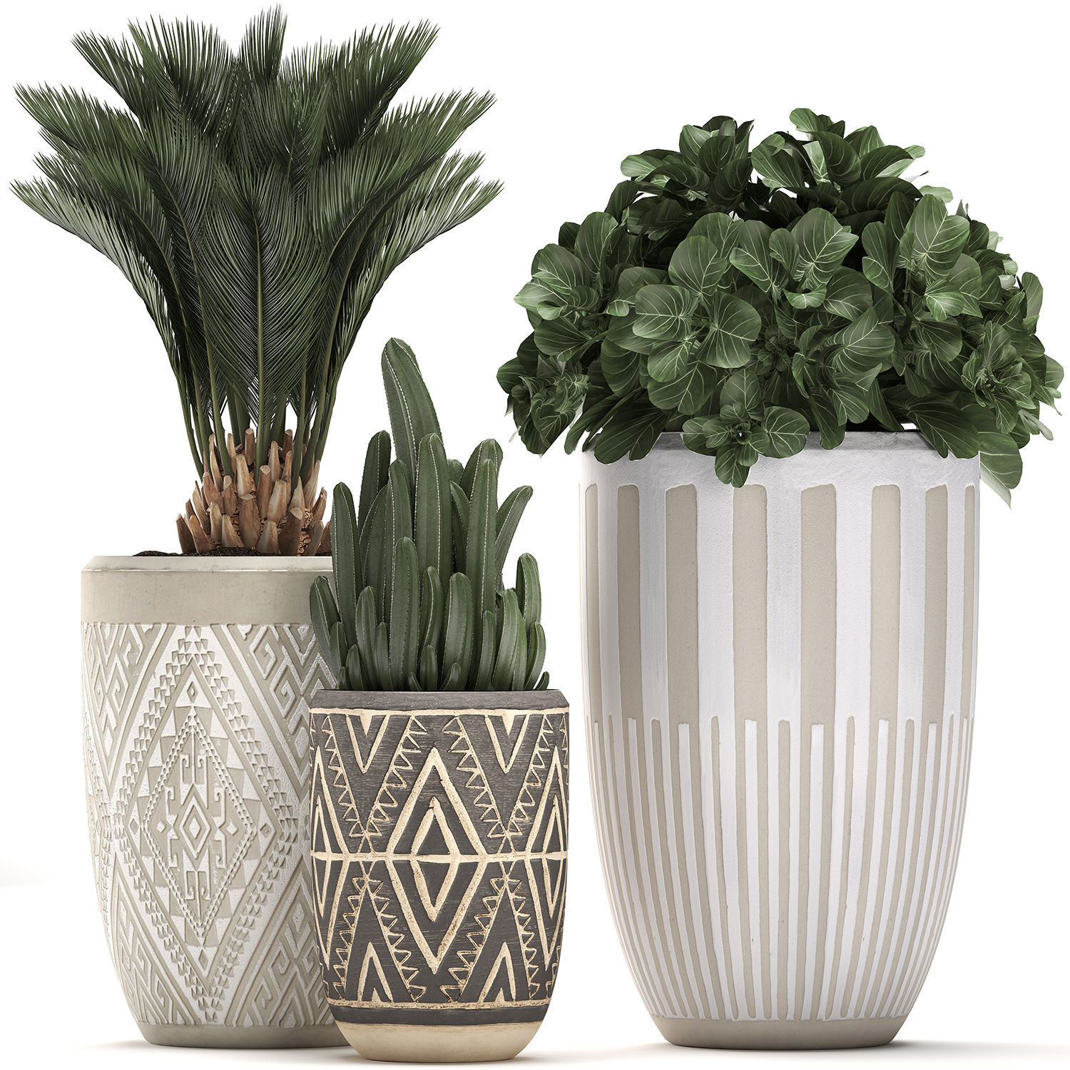 Decorative plants in flower pots for the interior 476