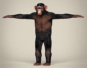 3D asset Low Poly Realistic Chimpanzee