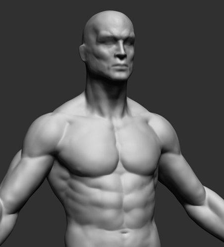Torso 3D Models for Download | TurboSquid