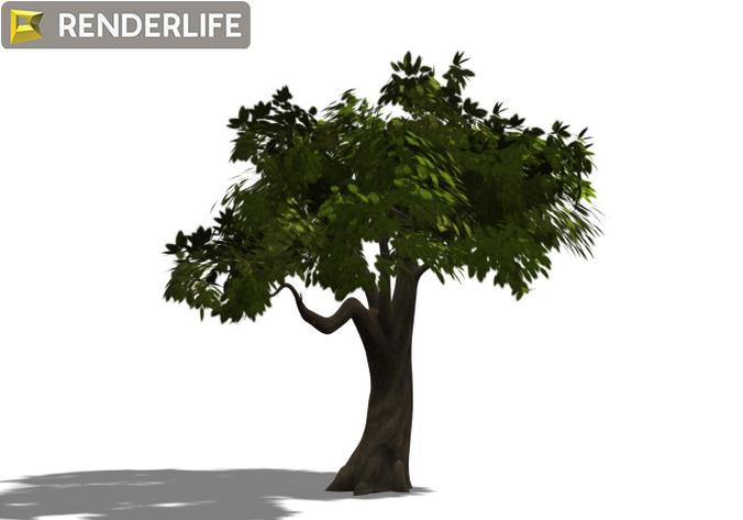 Tree 013D model
