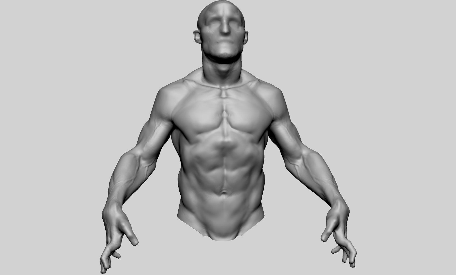 Male Upper Body 02 3D Model OBJ ZTL | CGTrader.com