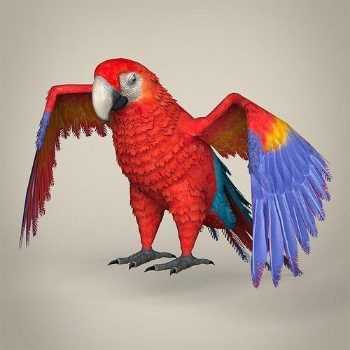 low poly realistic parrot 3d model low-poly max obj mtl 3ds fbx c4d lwo lw lws 1