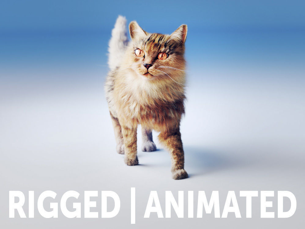 Rigged Cat Hyper Realistic model with Fur