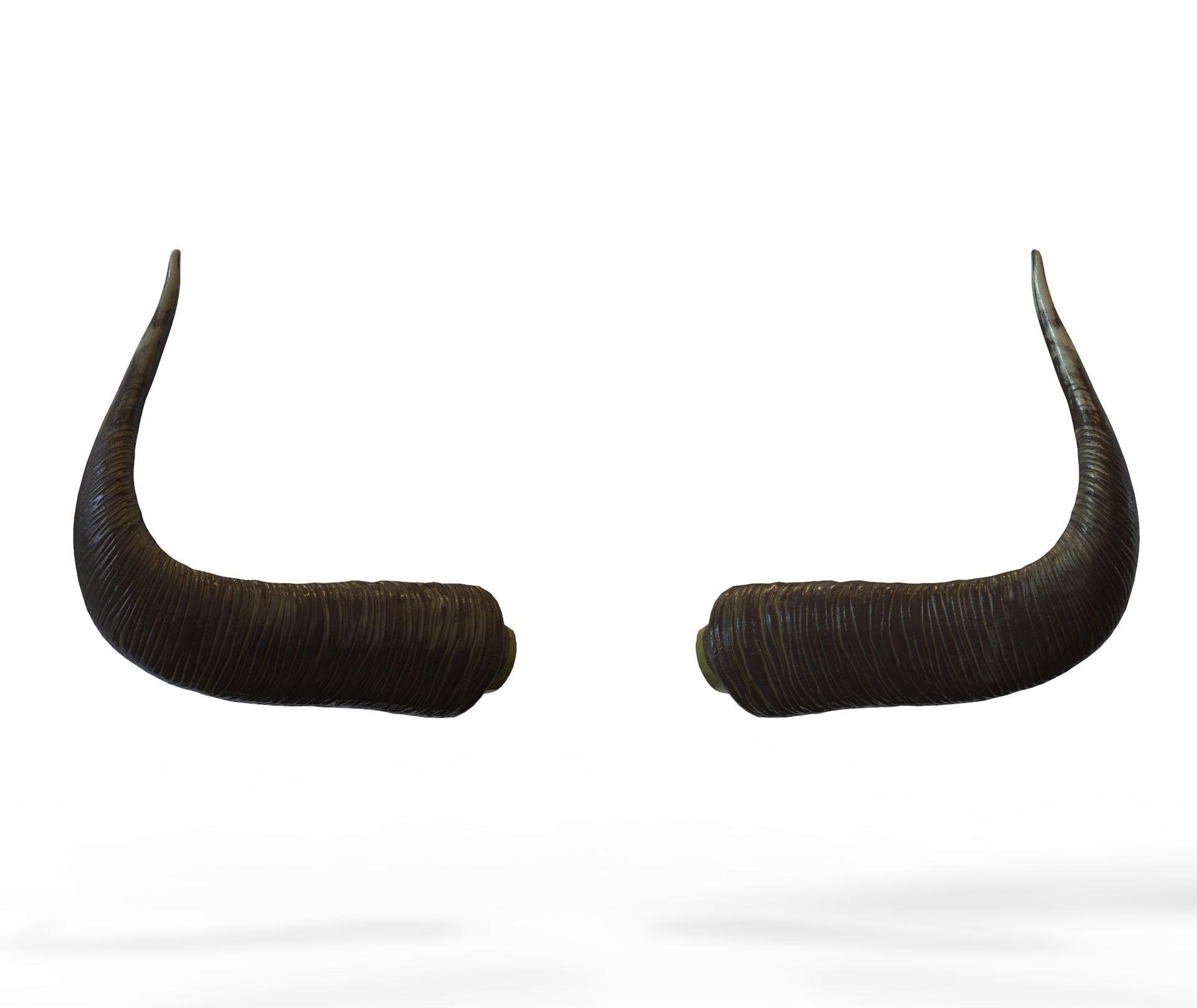 Bull Horns