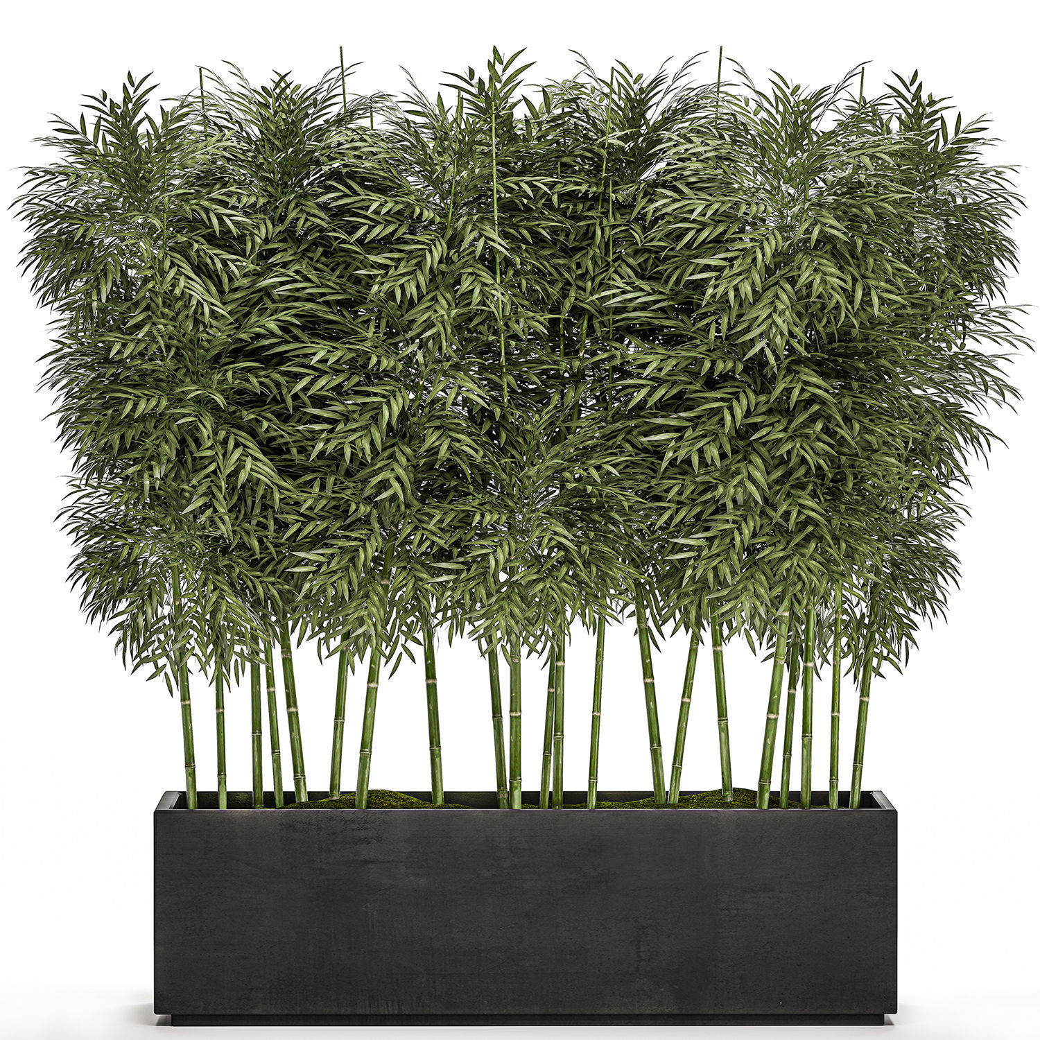 3d Model Bamboo Tree In Black Flowerpots For Parks And 1