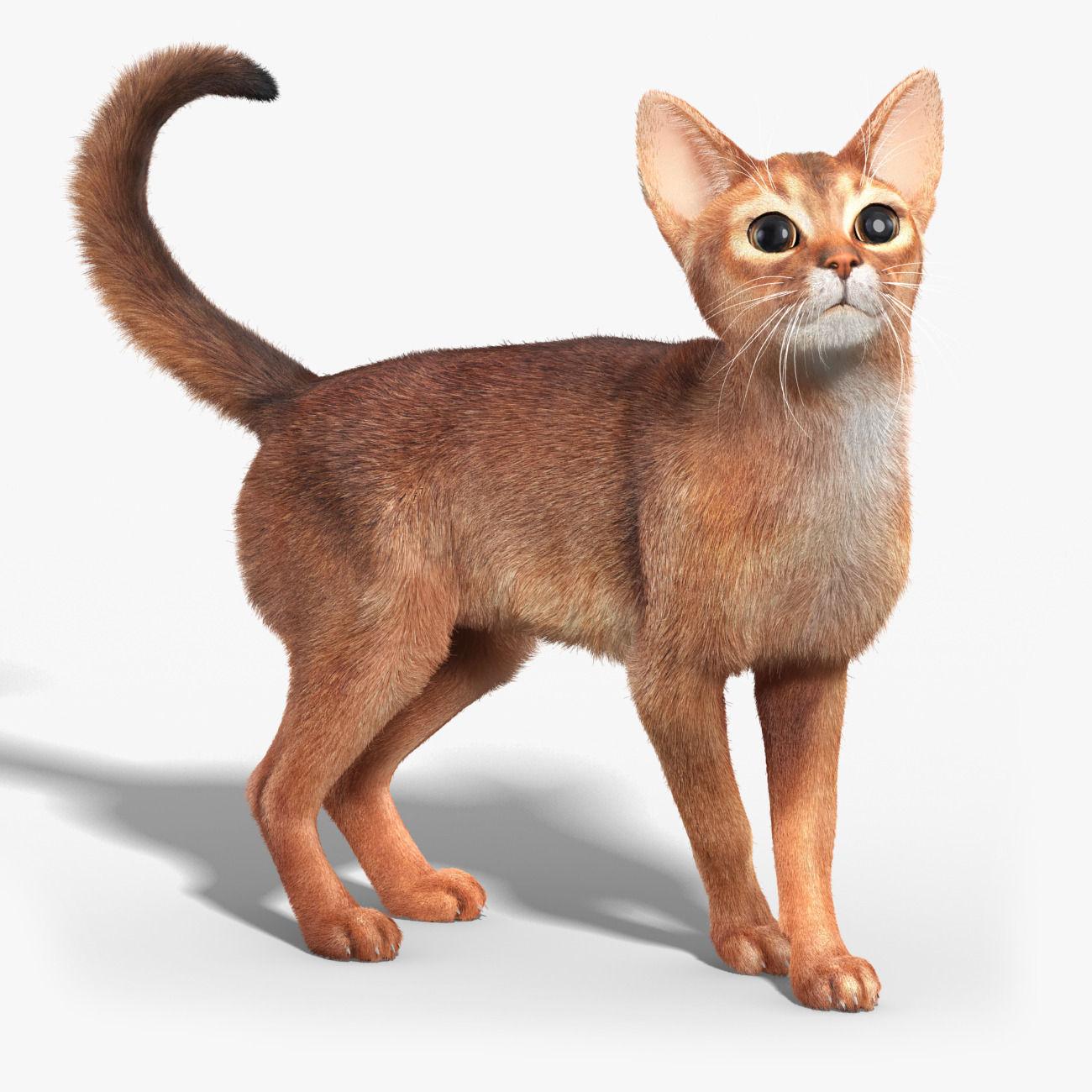 51+ Info Terbaru Model Cat Tembok 3d