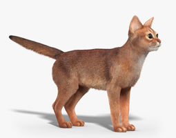 Abyssinian cat FUR 3D Model