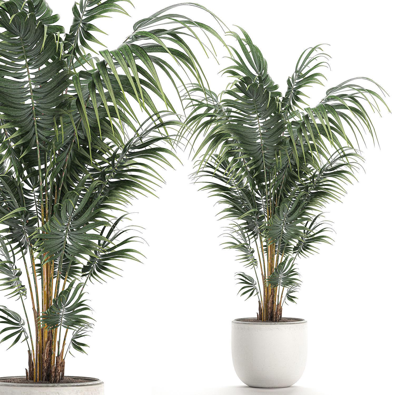 Decorative palm in a white flowerpot 518