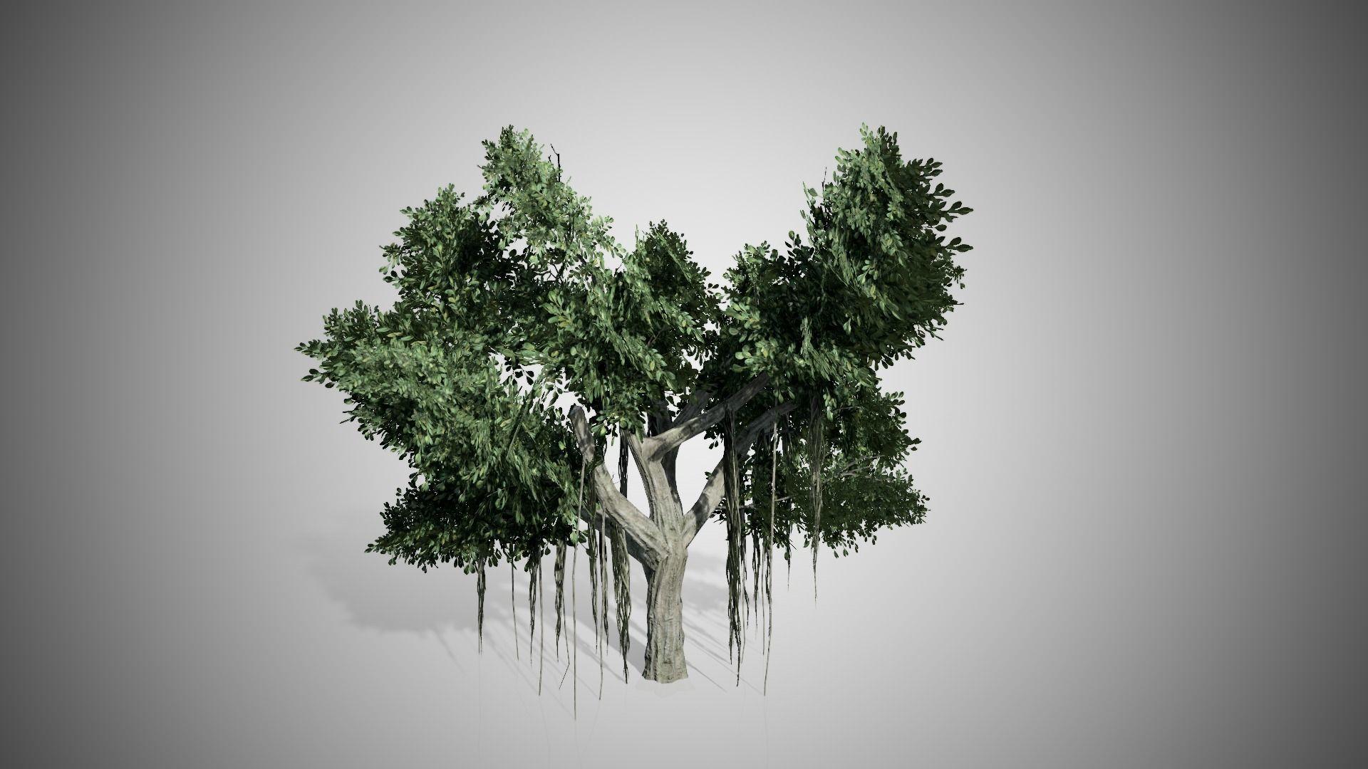 Chinese Banyan Tree