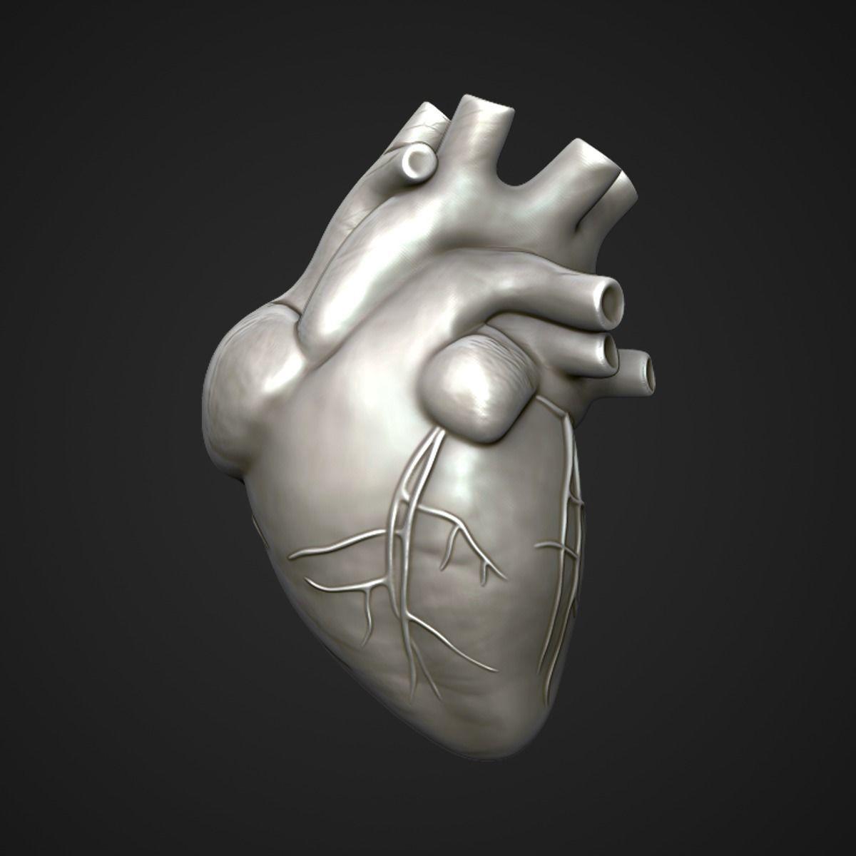 Human Heart Sculpt