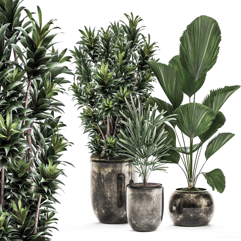 Decorative plants in a flowerpot for interior design 532