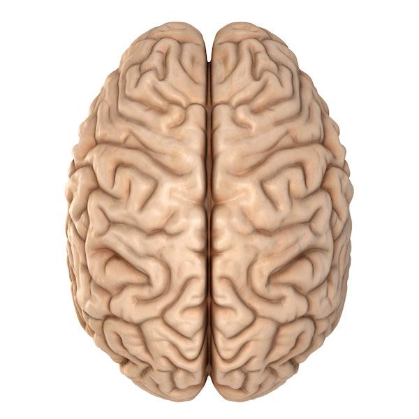 Accurate Human Brain 3D Model .obj .blend