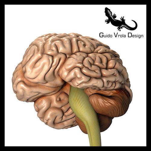 Accurate human brain3D model