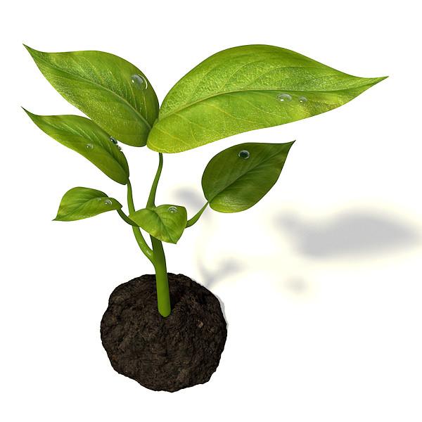 Small Plant 3d Model Obj 3ds Fbx Blend