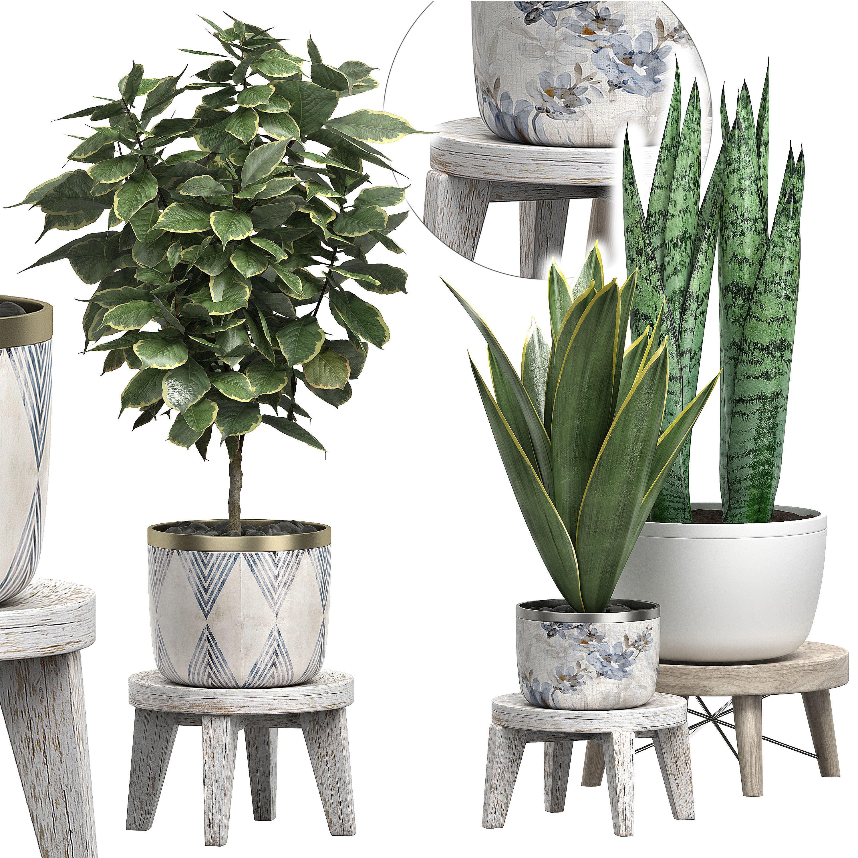 Potted plants Set 40