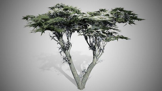 Monterey Cypress Winter Tree 3d Asset Cgtrader