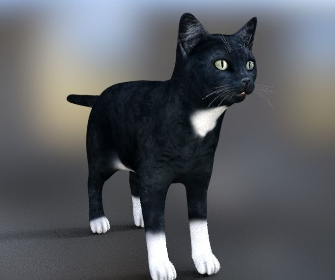 animated Cat poses 3d tabby   CGTrader