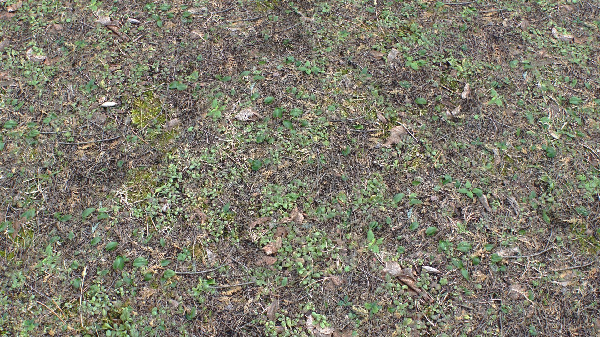Forest ground PBR Pack 10