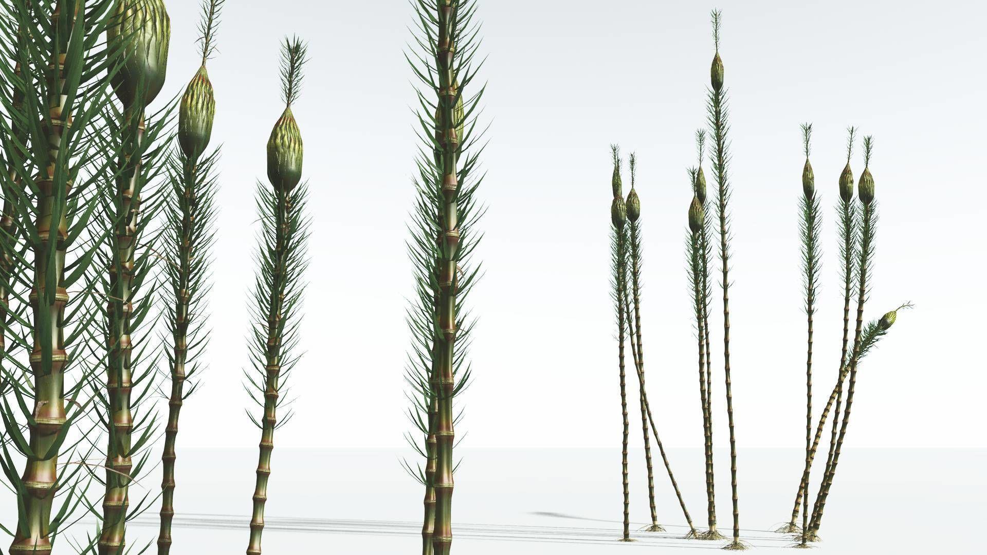 EVERYPlant Suckows Horsetail Tree 03 --16 Models--