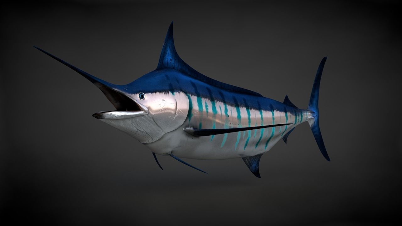 Blue Stripped Marlin C4D Rigged